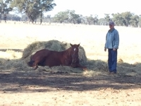 Front Page - yearling
