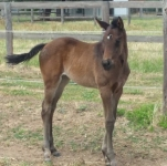 Stryker - Stacey Lee filly foal